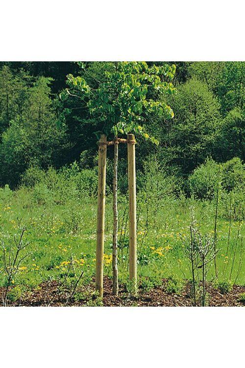 Leseni steber (250 cm x 60 mm, bor)