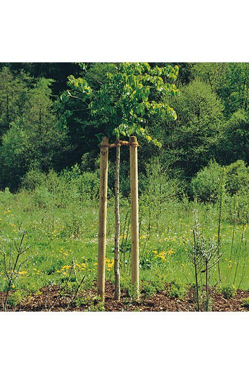Leseni steber (dolžina: 150 cm, premer: 60 mm, bor, zelene barve)