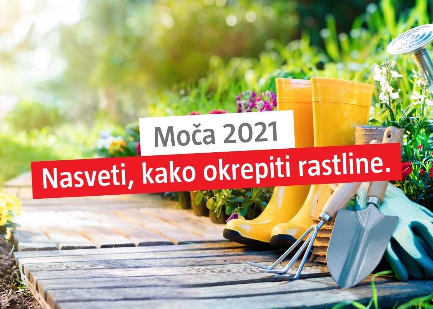 moca_frontz